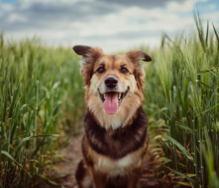 Happy dog sitting in a field at Two99 Monroe in Roanoke, Texas