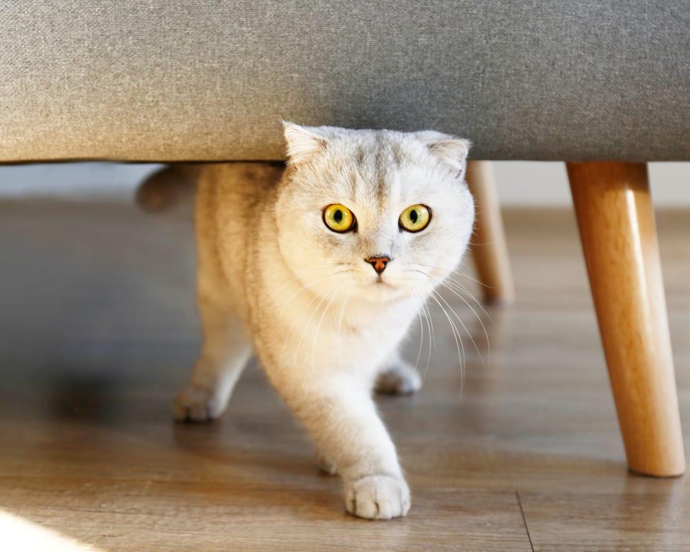 Cat walking under a chair at Oaks Hiawatha Station in Minneapolis, Minnesota