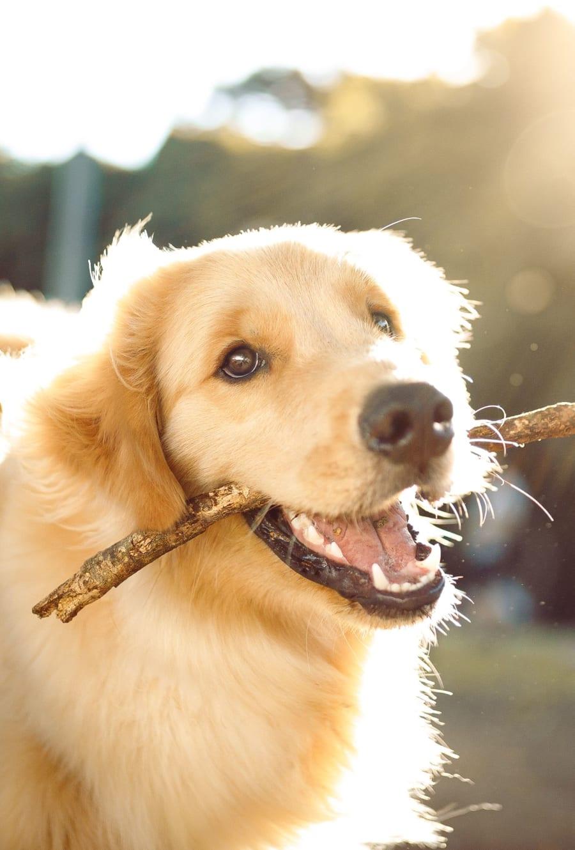 A resident's happy pup at Avenue @Creekbridge in Brandon, Florida