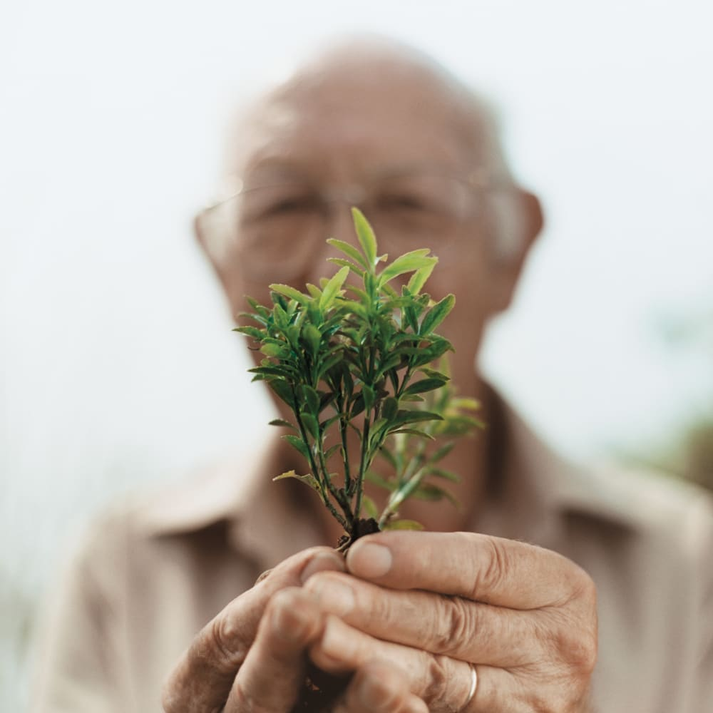 Senior man holding a young plant up to the camera lens at Anthology of Rochester Hills in Rochester Hills, Michigan