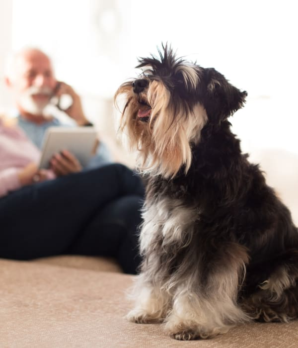 A small dog living with a resident at Inspired Living Ocoee in Ocoee, Florida