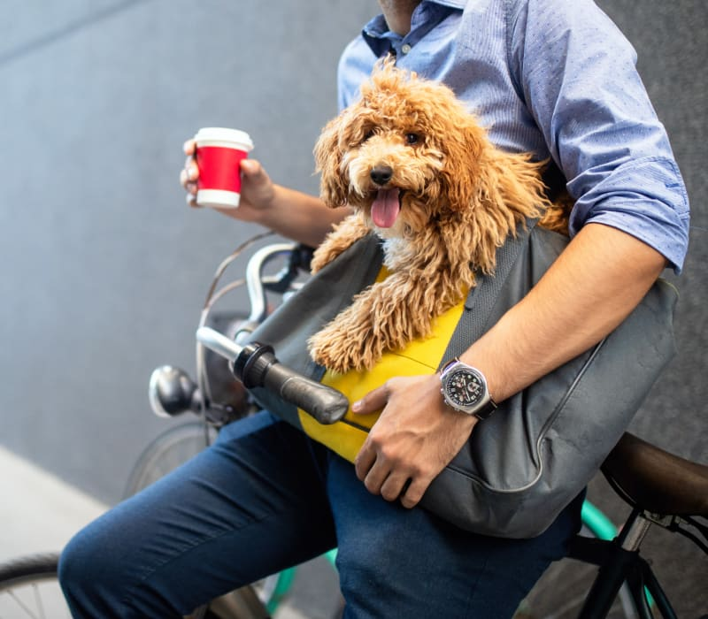 Resident carrying his dog in his bag while sitting on his bike near Marq on Burnet in Austin, Texas