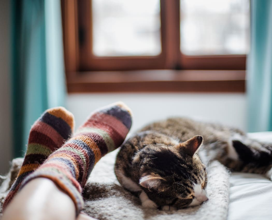 Cat sleeping by owner's legs at Diablo Pointe in Walnut Creek, California