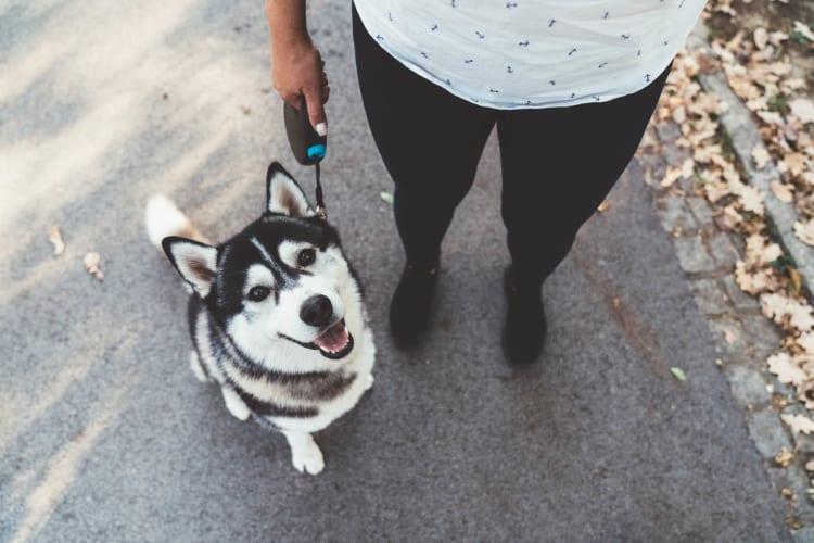 Husky dog on a walk with resident at Eddison at Deerwood Park in Jacksonville, Florida