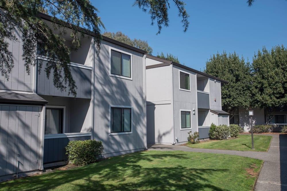 Large grass lawn for summer picnics at Park Ridge Apartment Homes in Rohnert Park, California