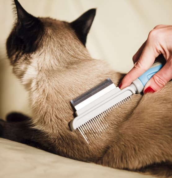 Cat getting brushed at Civic Feline Clinic in Walnut Creek, CA