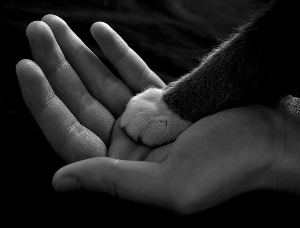 Cat paw in human hand at Arizona Avenue Animal Clinic in Chandler, AZ