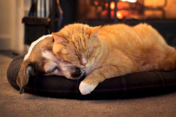 Dog and cat sleeping at Springs at Port Orange in Port Orange, Florida
