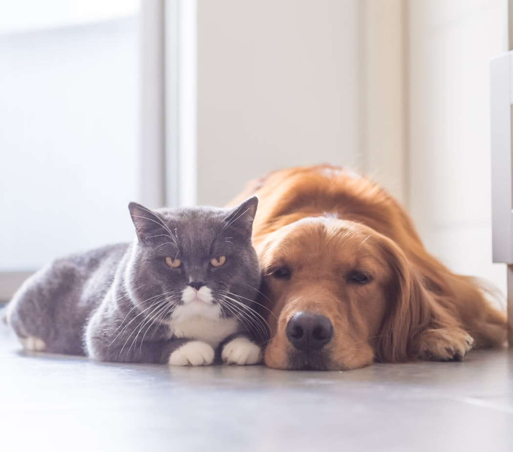 Cat and dog waiting for their owner to return to their new home at Sierra Canyon in Glendale, Arizona