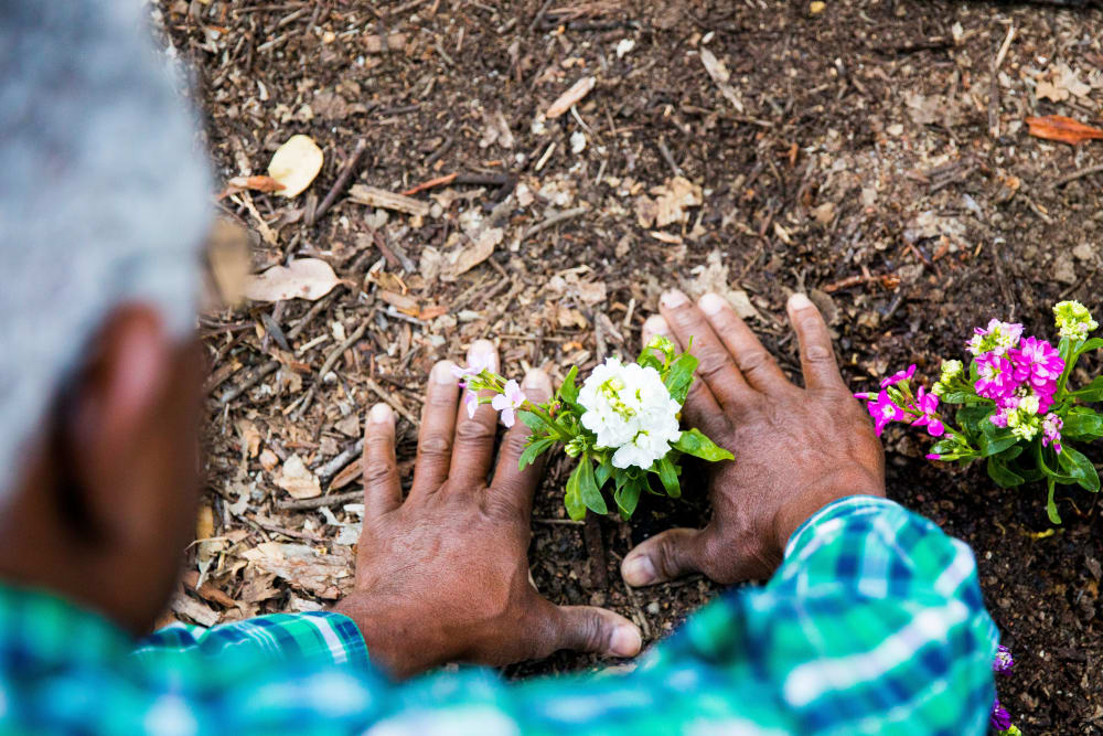 Resident planting flowers at Sheldon Park is in Eugene, Oregon.