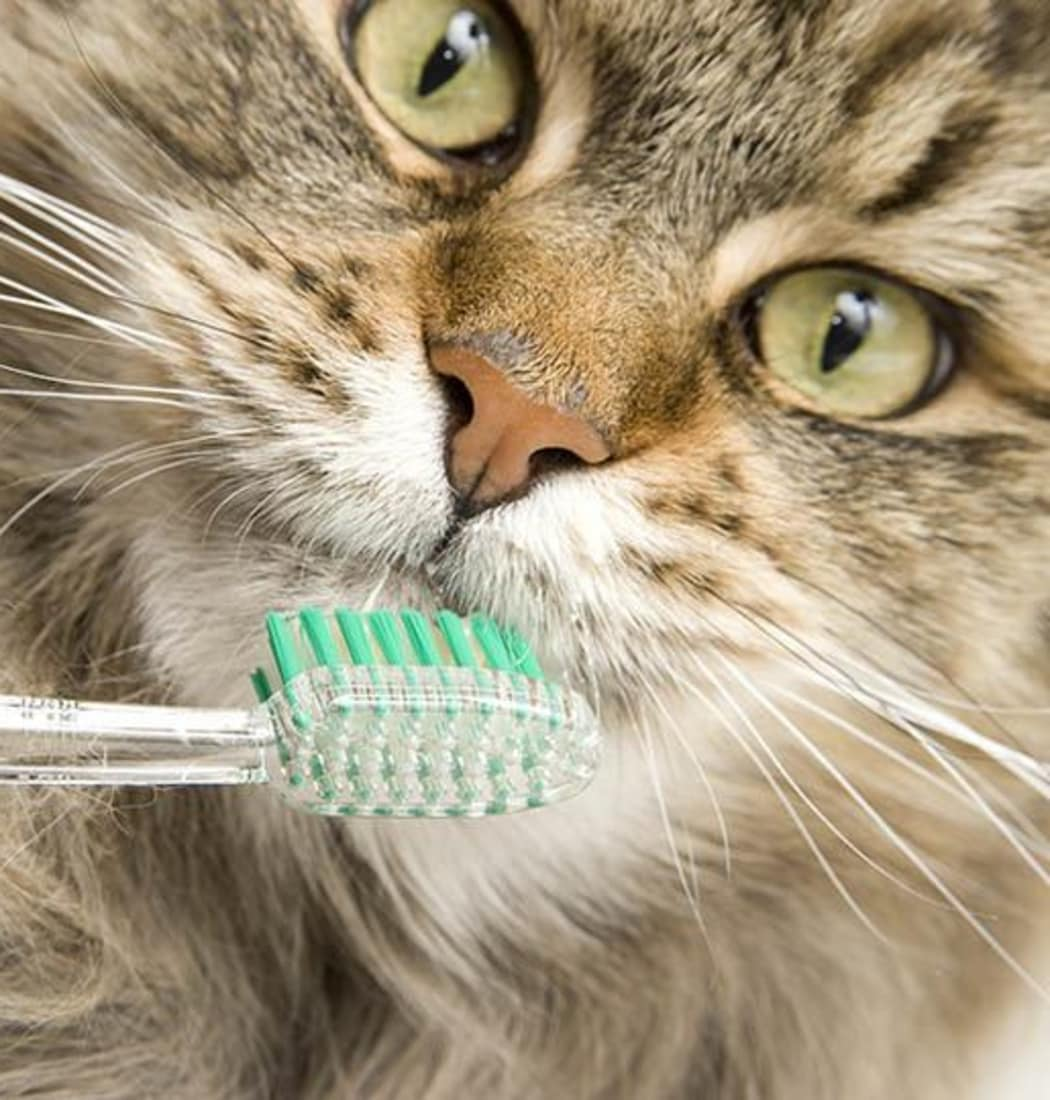 Stoughton dental disease prevention information at Animal Hospital