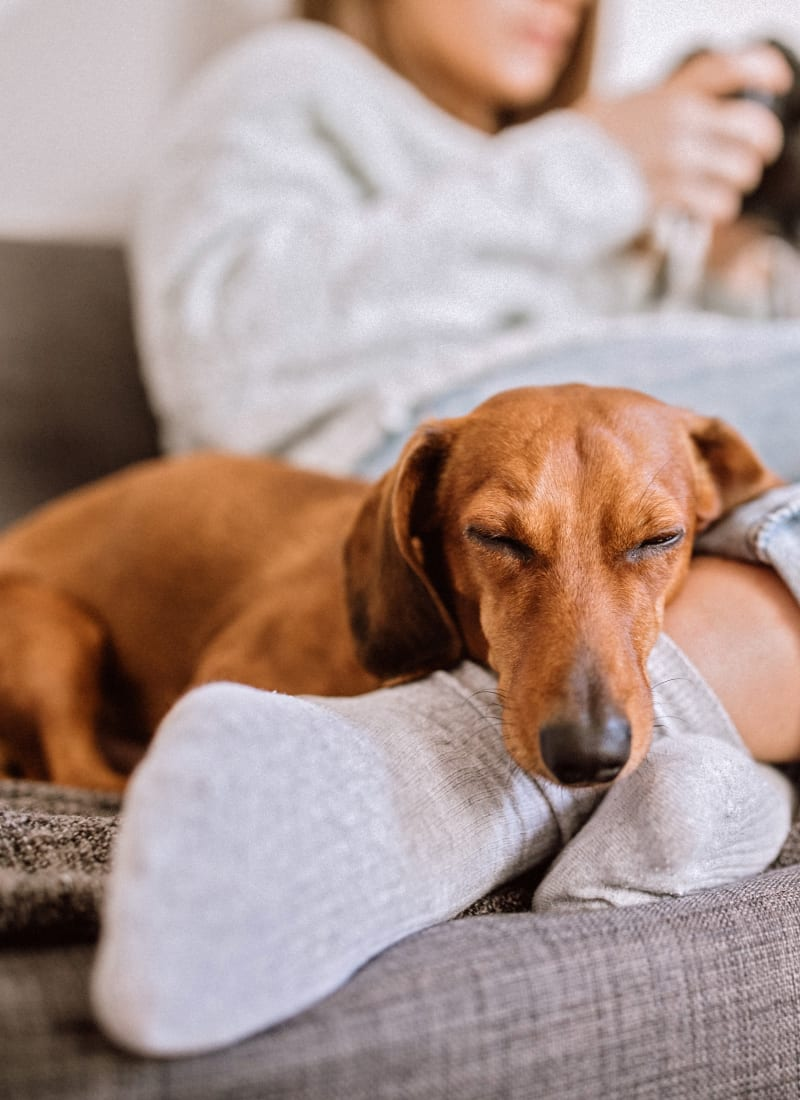 View our pet policy at Marquis at The Woodlands in Spring, Texas
