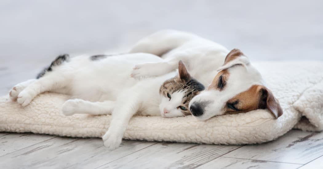 Pets napping at Willow Oaks Apartments in Chesapeake, Virginia