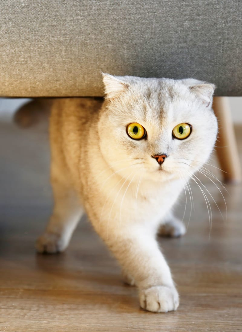 Two pets maximum per apartment at The Links at Plum Creek in Castle Rock, Colorado