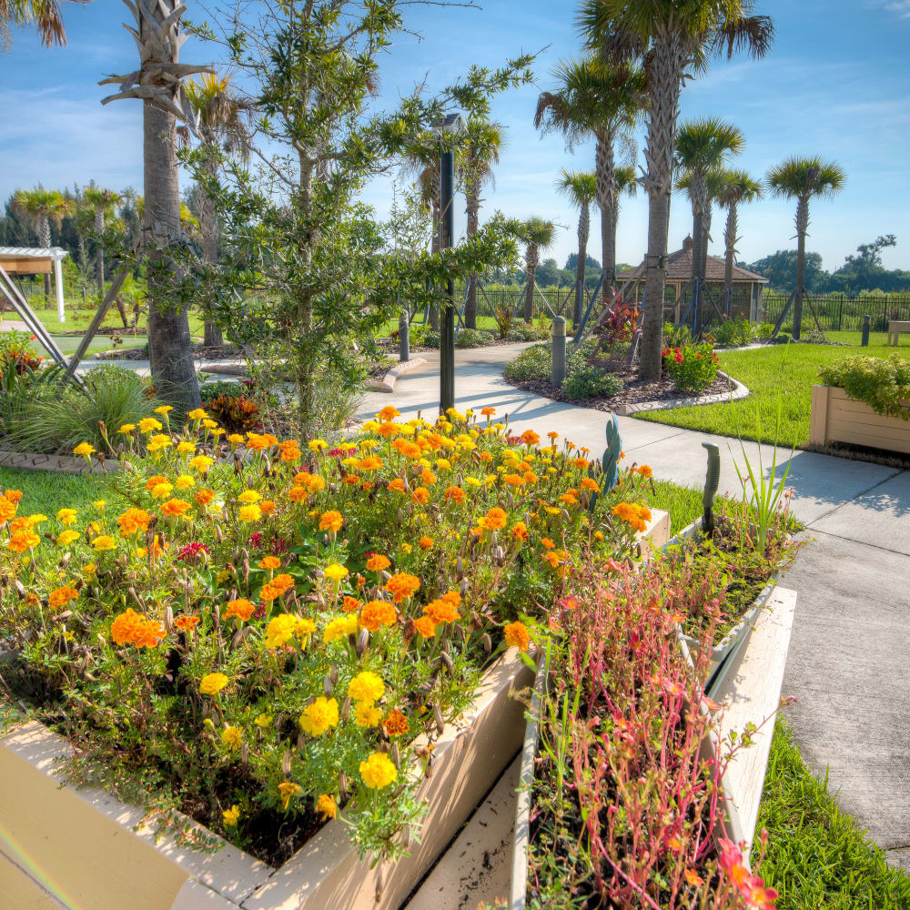 Beautiful landscaping at Inspired Living Ivy Ridge in St Petersburg, Florida