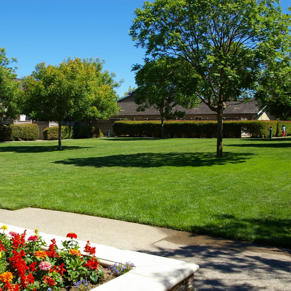 Beautiful lawn at Village Green Apartments in Cupertino, California