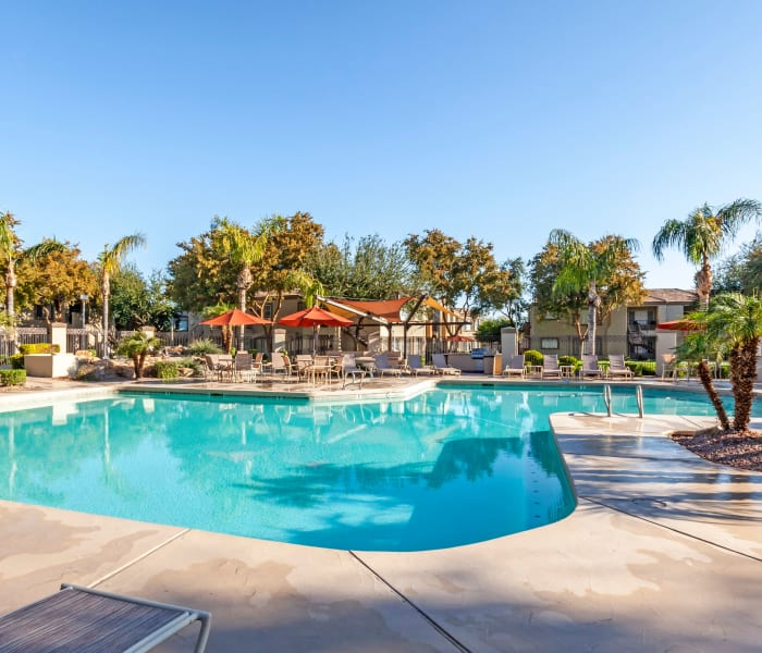 Palm trees and beautiful swimming pool at Finisterra in Tempe, Arizona