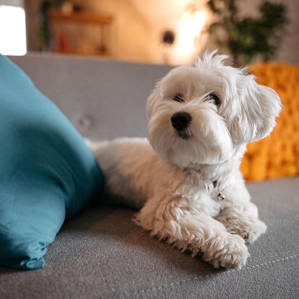 Dog laying on a bed at Nickel Creek Apartments in Tulsa, Oklahoma