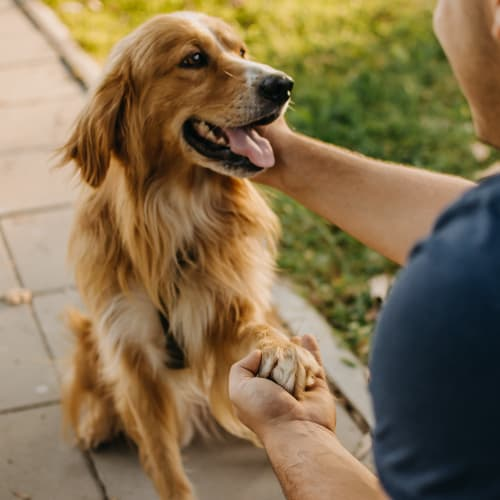 Man shaking hands with, and petting a dog at Fusion in Jacksonville, Florida