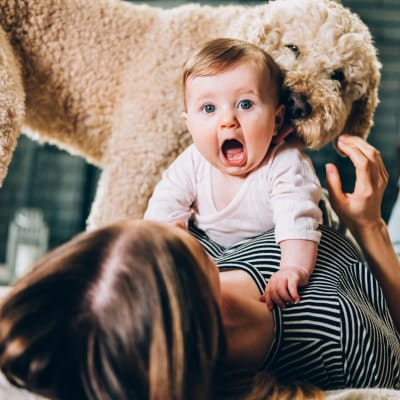 Resident with baby on her stomach and dog licking baby's face at Marquis at Bellaire Ranch in Fort Worth, Texas
