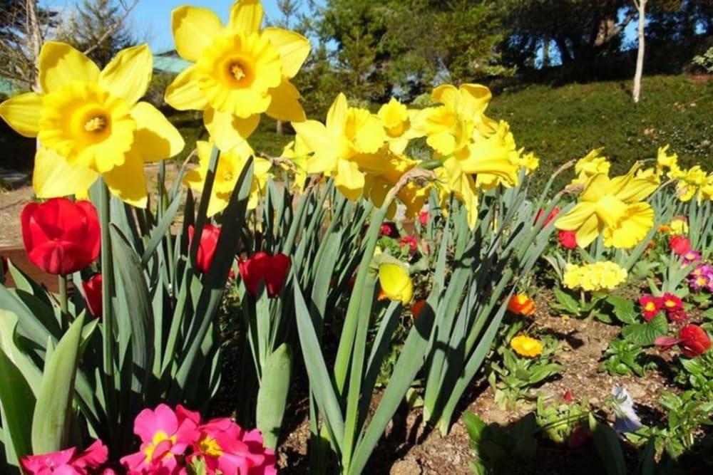 Beautiful flowers at Winding Commons Senior Living in Carmichael, California
