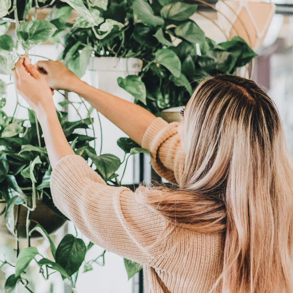 Resident tending to the hanging plants in her apartment at Oaks Braemar in Edina, Minnesota
