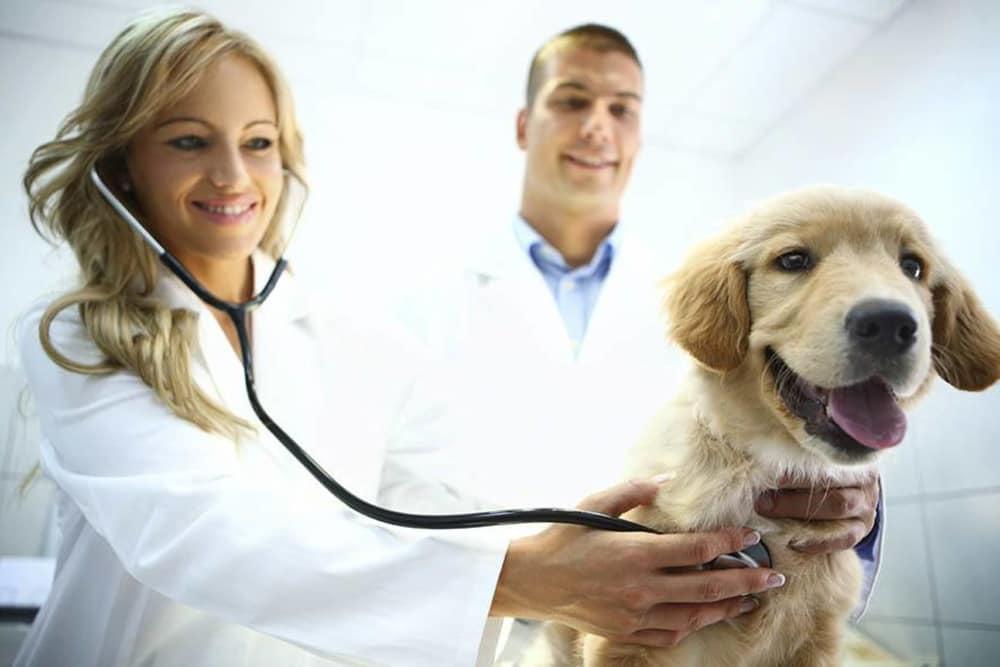 Friendly staff at Underwood Animal Clinic in La Porte
