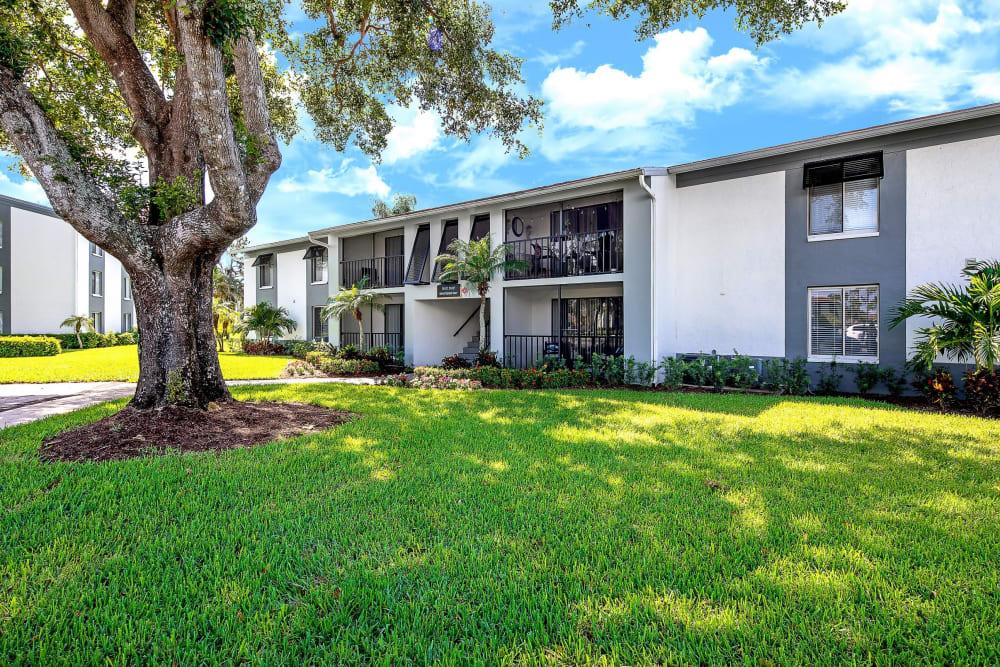 Large green lawn at Verse at Royal Palm Beach in Royal Palm Beach, Florida