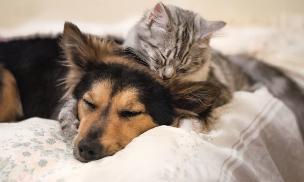 Cat and dog sleeping at The Venue in Rochester, New York