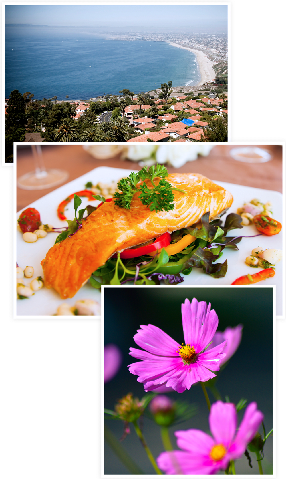 Photos collage of lifestyle options at Clearwater at South Bay in Torrance, California
