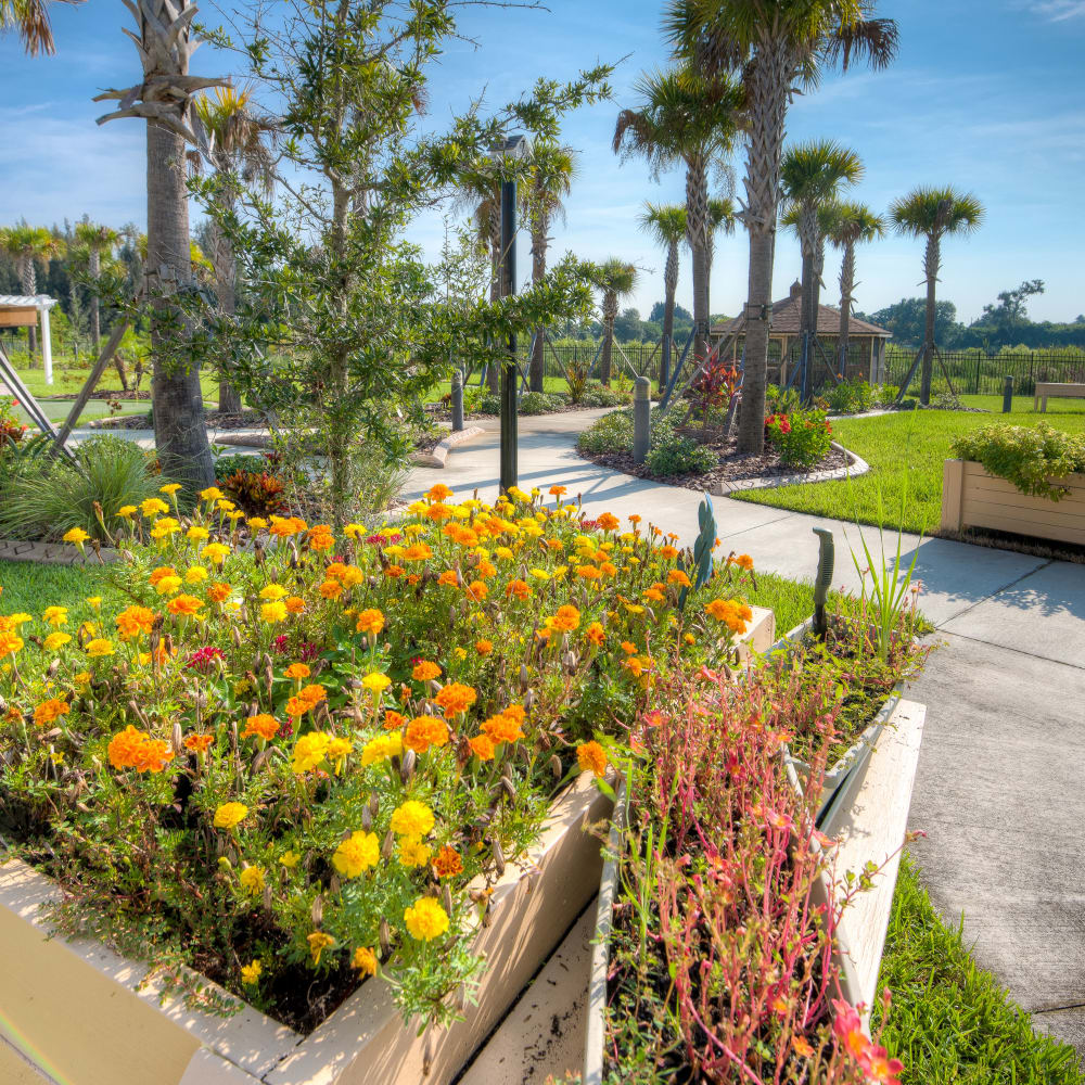 Beautiful landscaping at Inspired Living in Tampa, Florida