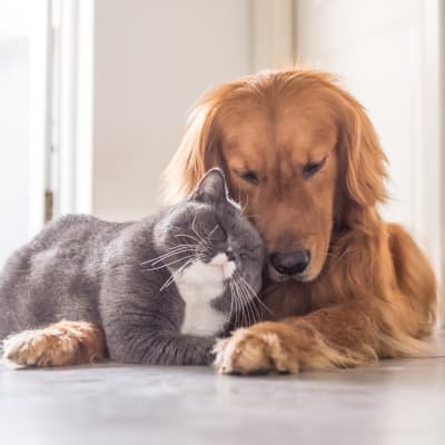 Cat cuddling with dog at Marquis at Sonoran Preserve in Phoenix, Arizona