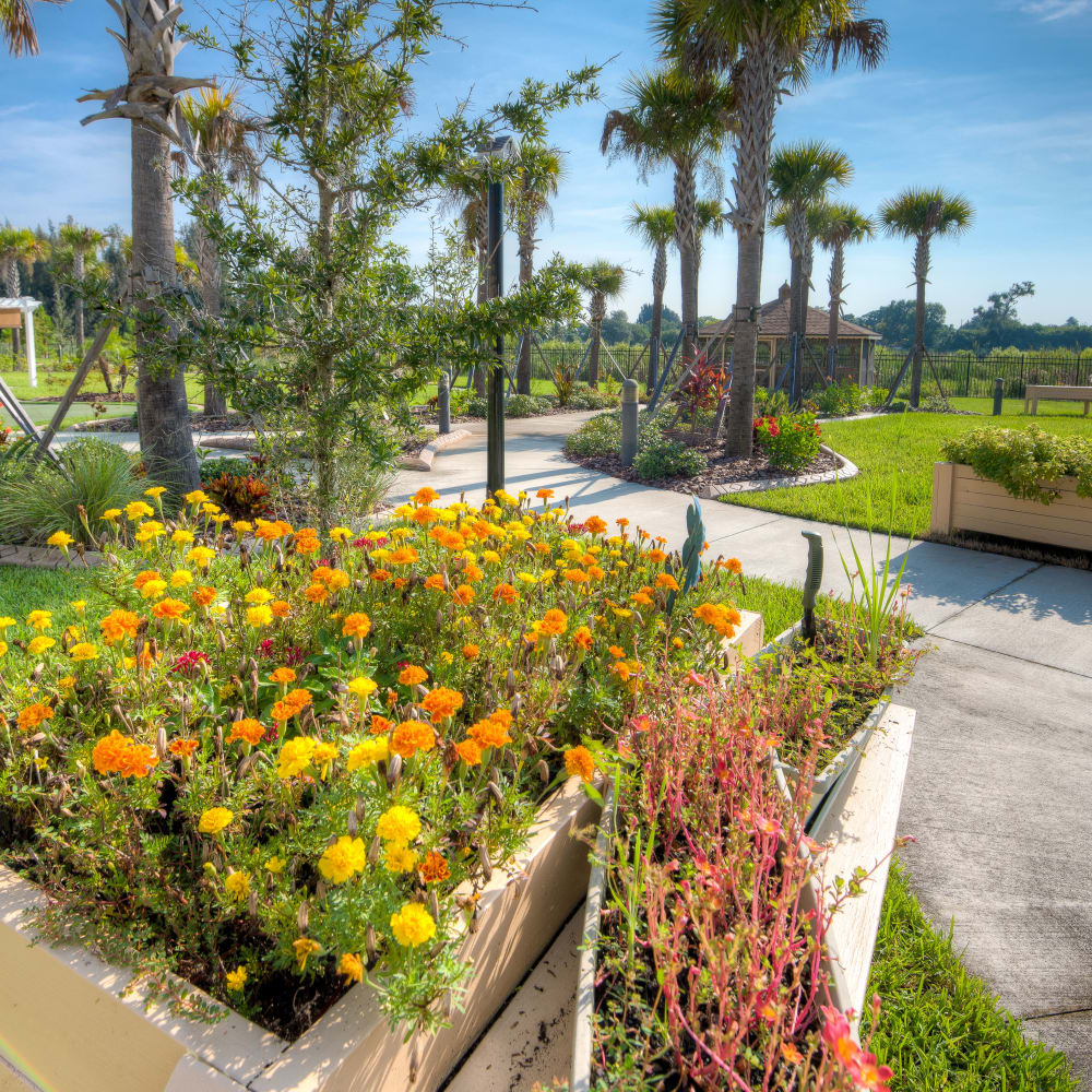 Beautiful landscaping at Inspired Living at Sun City Center in Sun City Center, Florida