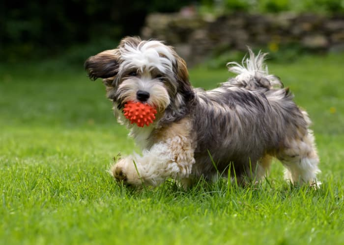 Dog fetching a ball at  Kensington Manor Apartments in Farmington, Michigan