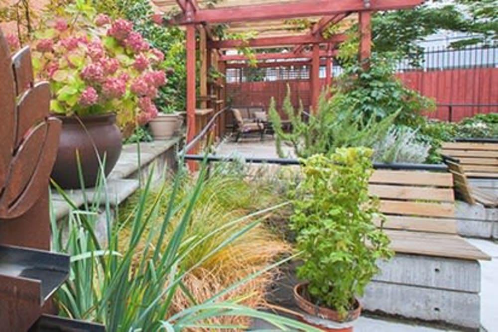 Garden at Nikkei Manor