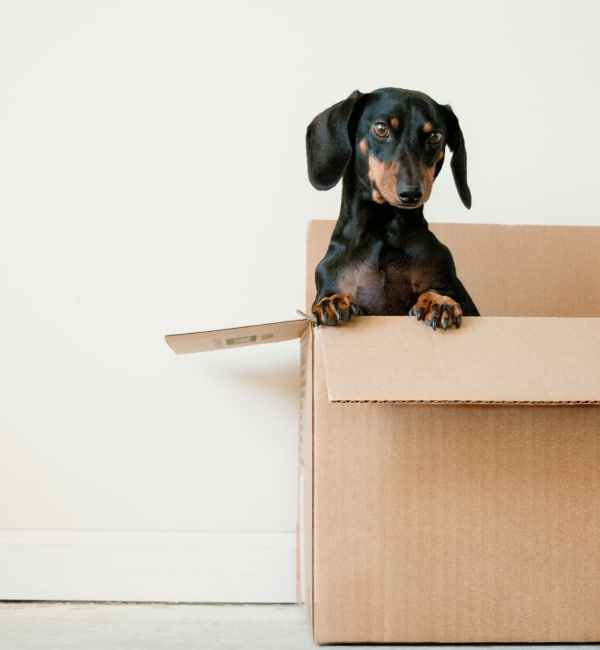 Dachshund in box at Storage Solutions in Los Angeles, California