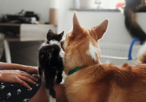 Two pets maximum per apartment at Water Marq in Austin, Texas