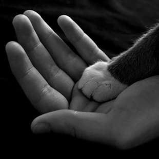 Paw in hand at Danvers Animal Hospital