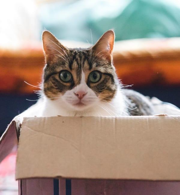 Cat sitting in a cardboard box at Olde Hampton Village Apartments in Hampton, New Hampshire