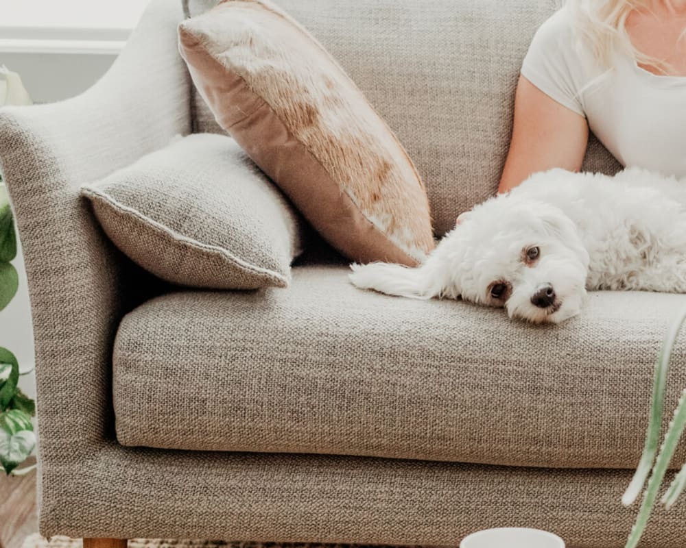 Dog relaxing on the couch with his owner in their new home at Minnetonka, Minnesota, near Oaks Glen Lake