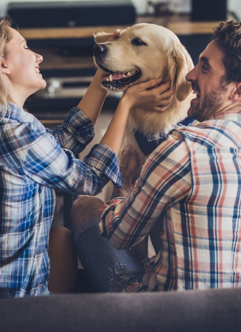 View our pet policy at Marquis at Clear Lake in Webster, Texas