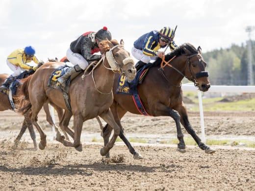 Engblom korsar gränsen med fem hästar