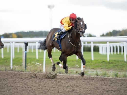 En häst i varje V4-avdelning - alla kan vinna?