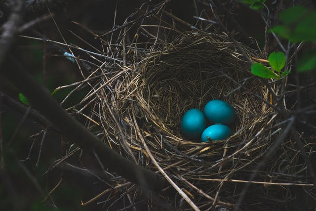 Thorchain and Haven Protocol promise to cultivate a positive environment for creating nest eggs