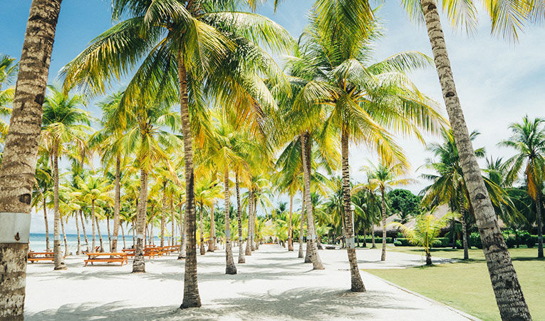 Palm trees on a beach in the Philippines