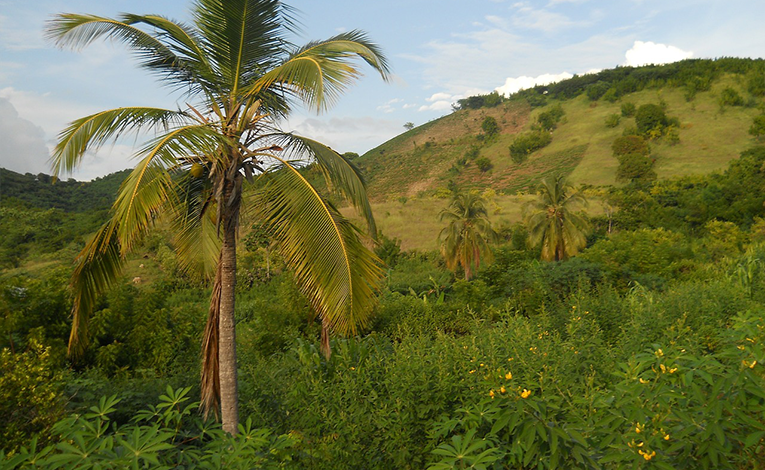 Volunteering in Haiti is more than a tropical vacation, so make sure youre ready.