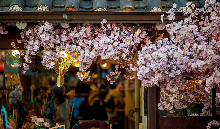 Cherry blossoms blooming in Seoul, South Korea