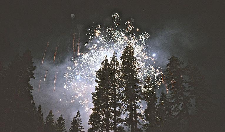 fireworks behind pines