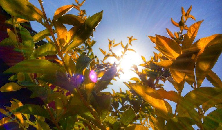 beautiful sun shining through plants