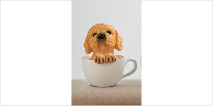 Cockapoo Teacup Dog from Studio